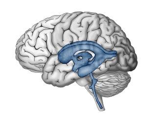 Dementia forum – logo